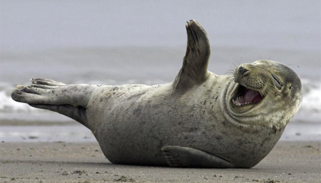 seal LOLing
